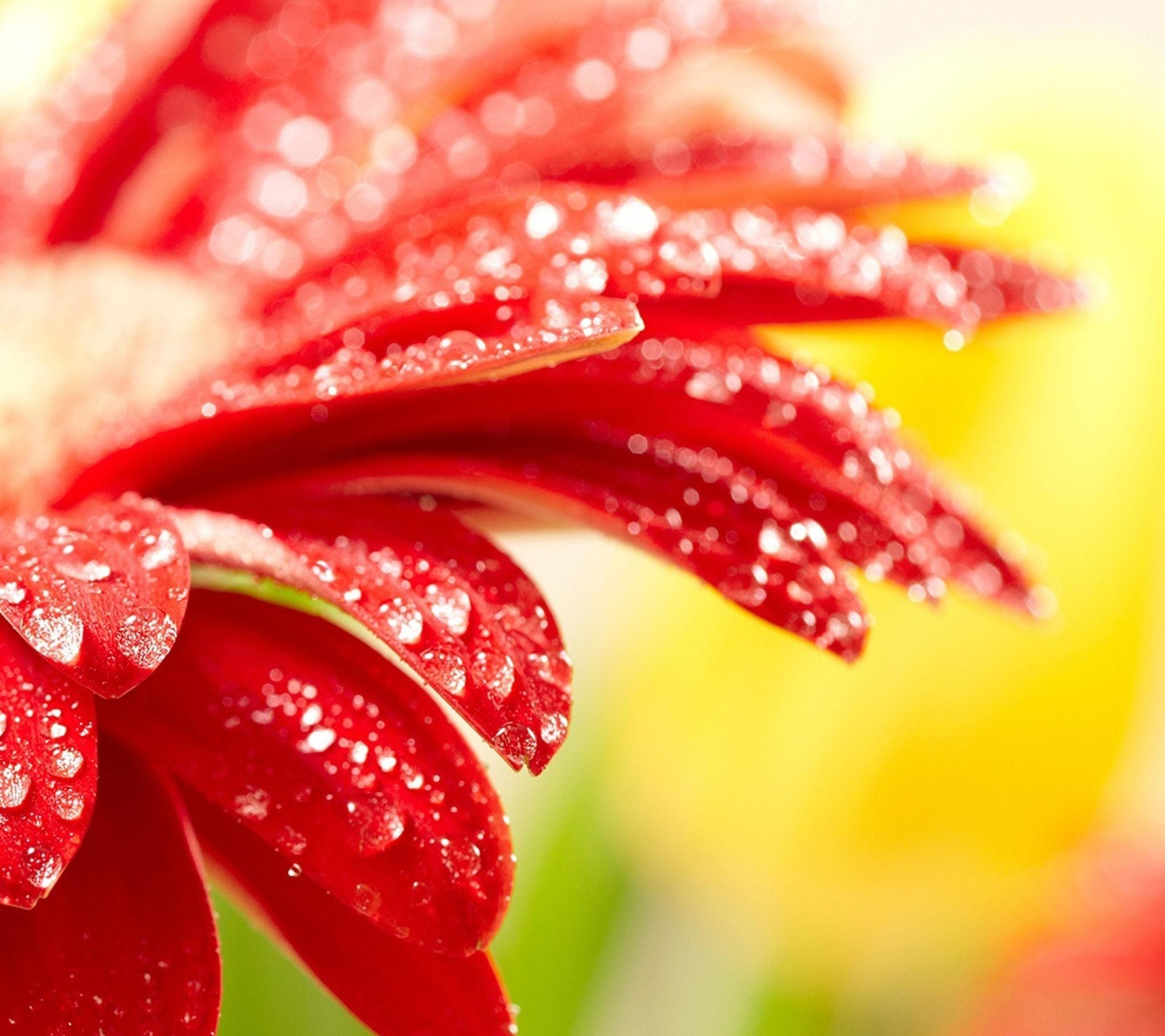 Beautiful Wallpapers For Samsung Galaxy S4