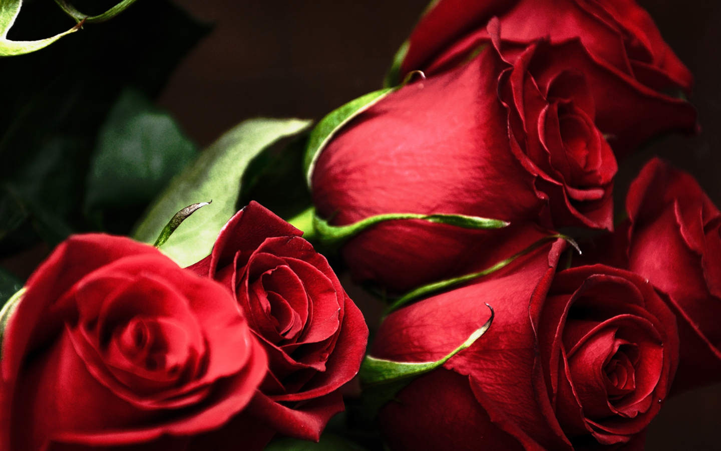 Beautiful Wallpapers Red Roses