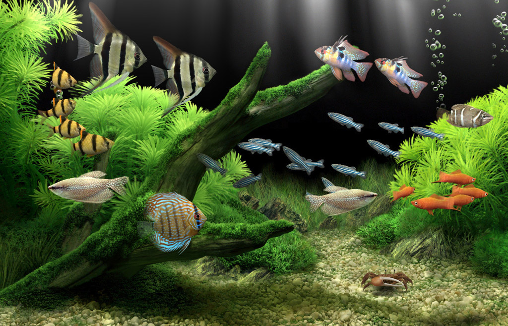 Best Aquarium Wallpaper