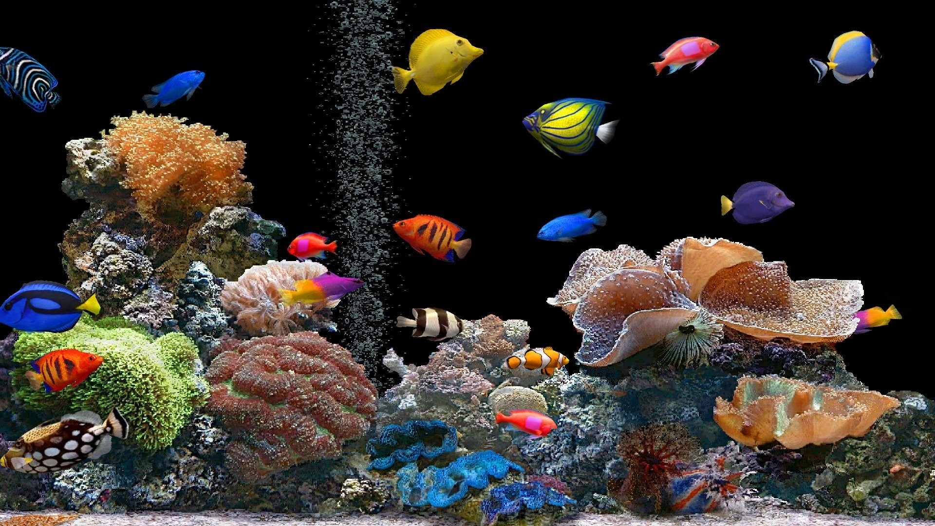 Best Fish Wallpaper