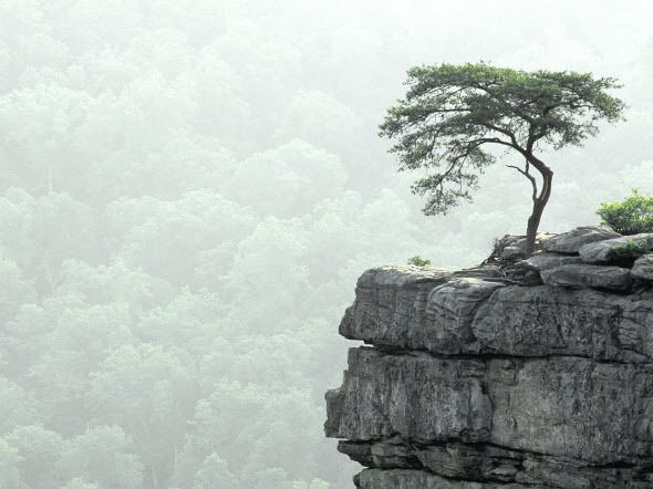 Best Nature Wallpapers Ever