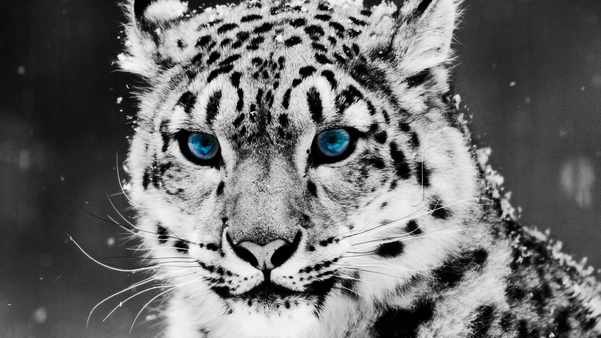 Best Tiger Wallpapers HD