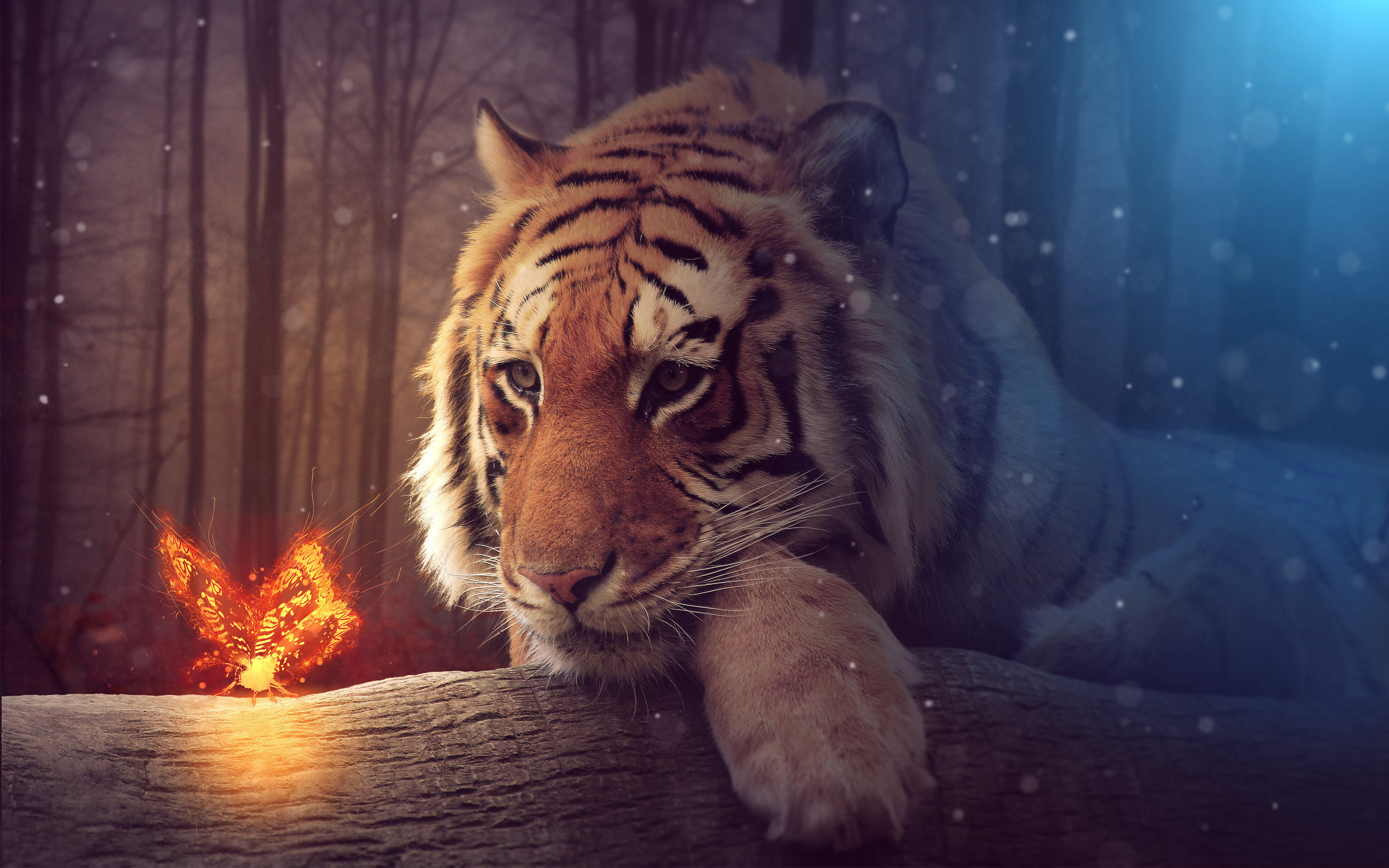 Big Tiger Wallpaper