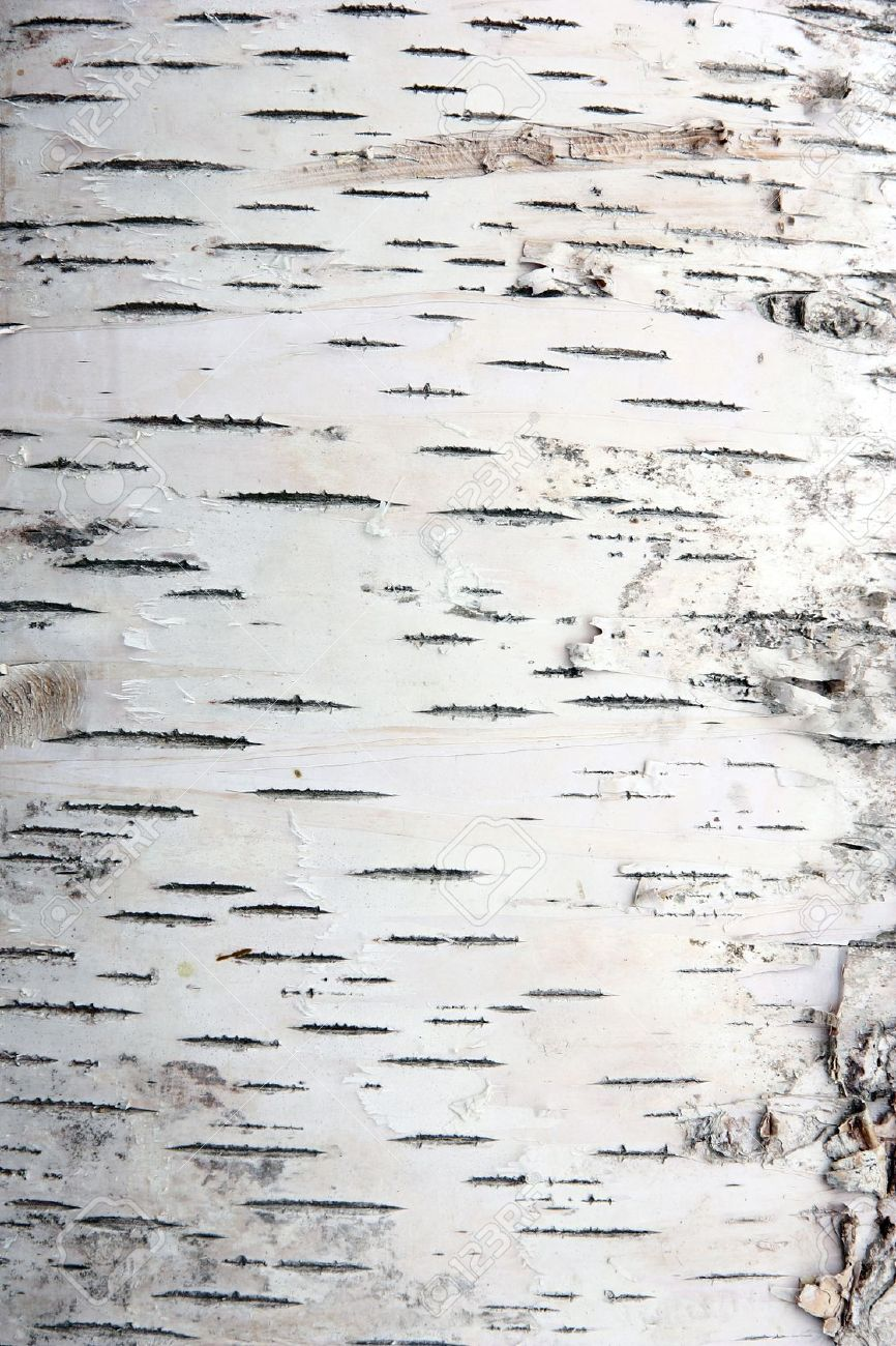 Birch Tree Bark Wallpaper