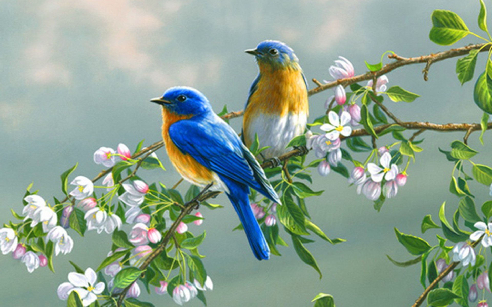Bird And Flower Wallpaper