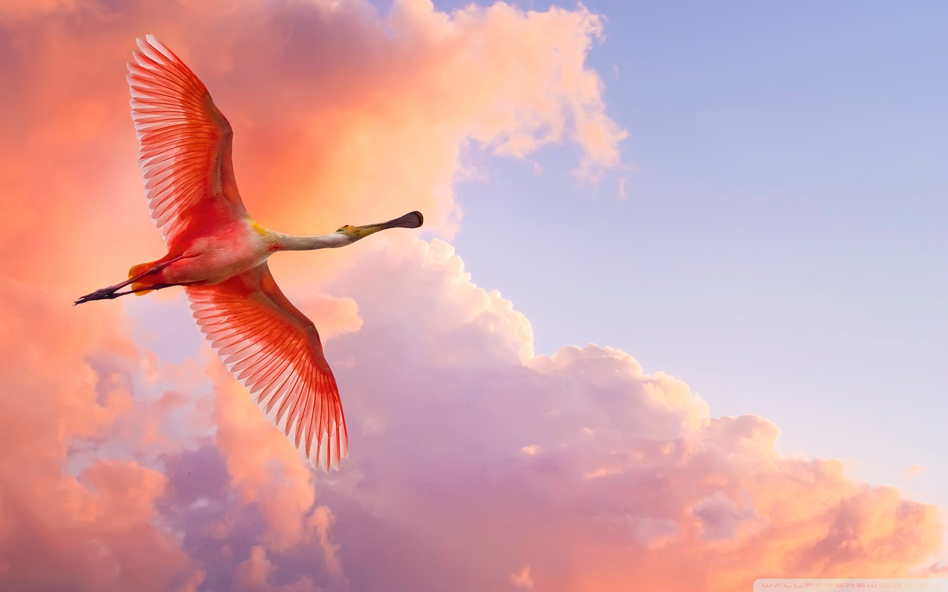 Bird Flying Wallpaper
