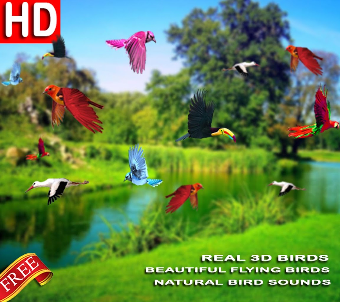 Beautiful Nature Hd Picture Download: Download Bird Live Wallpaper Android Gallery