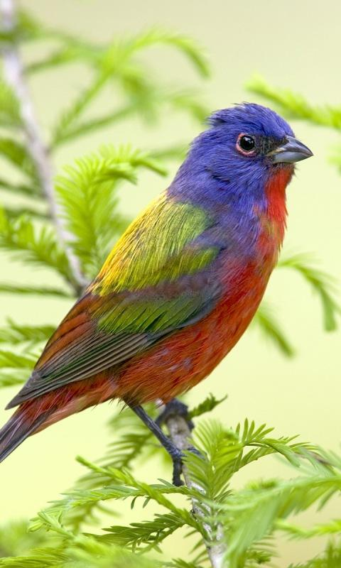 Download Bird Live Wallpaper Android Gallery