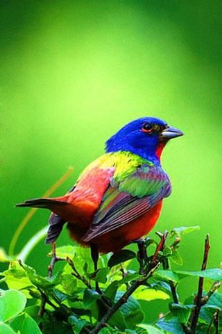 Download Bird Live Wallpaper Android Gallery320 x 480 jpeg 28kB