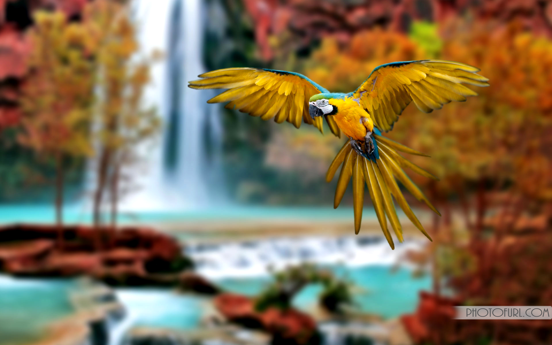 Bird Wallpaper Australia