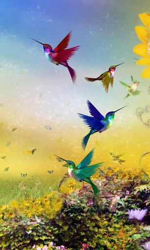 Birds Live Wallpaper For Android