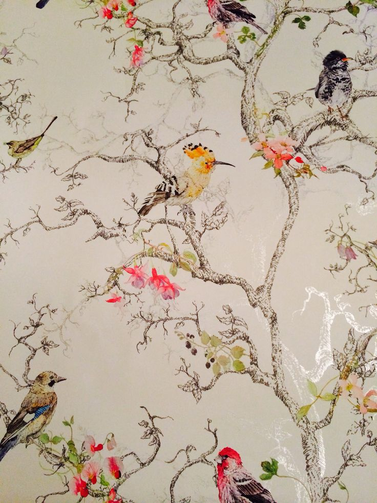 Birds Wallpaper For Walls