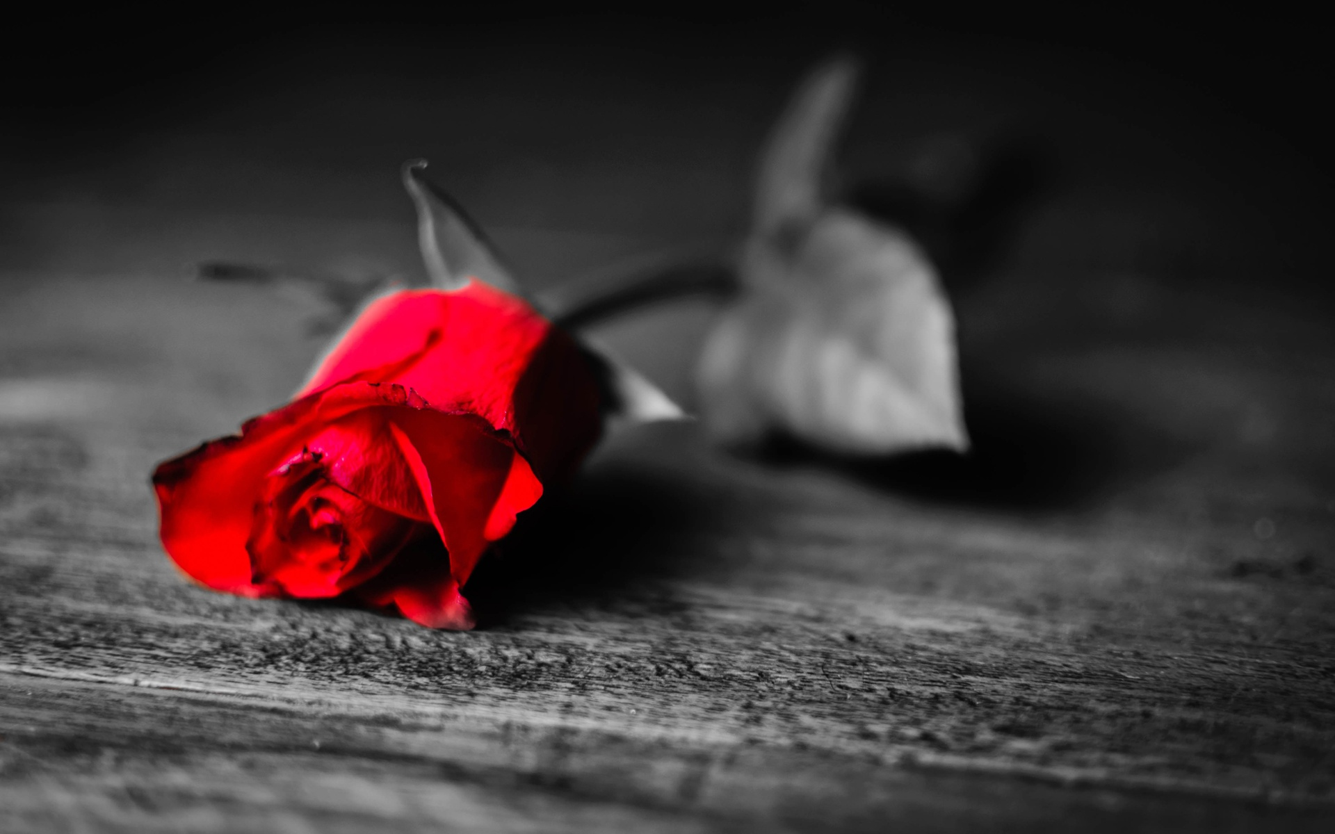 Download black and red rose wallpaper gallery - Black red rose wallpaper ...