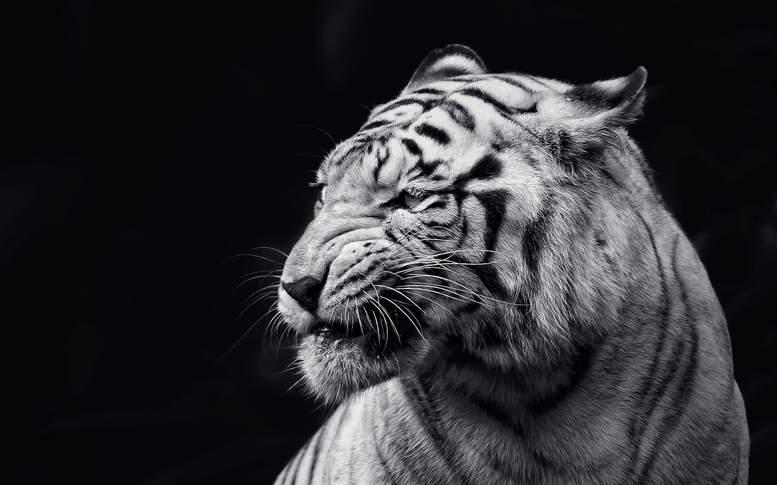 Black And White High Resolution Wallpapers