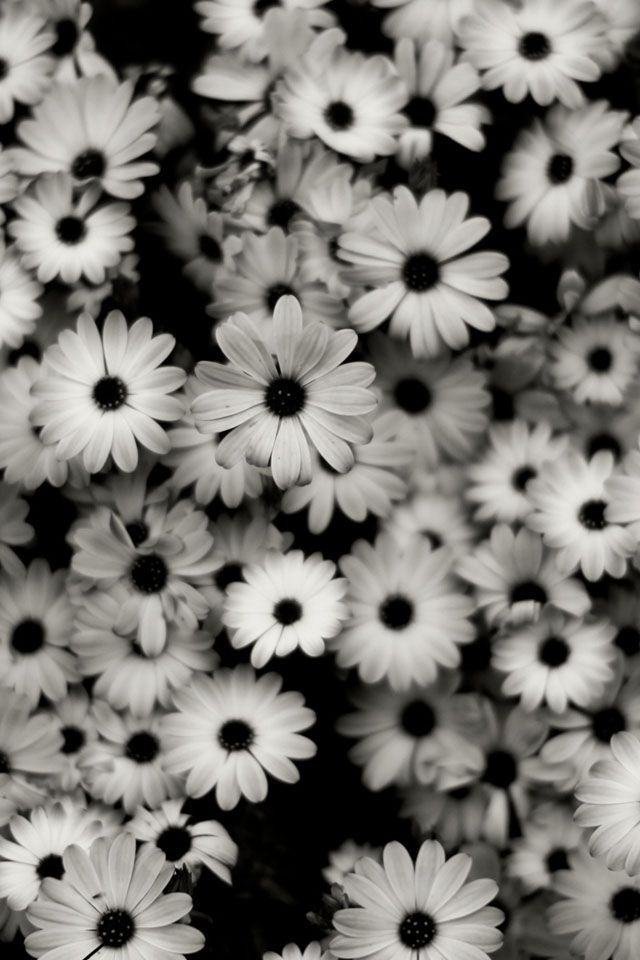 Unduh 960 Koleksi Wallpaper Iphone Tumblr Black And White HD Terbaik