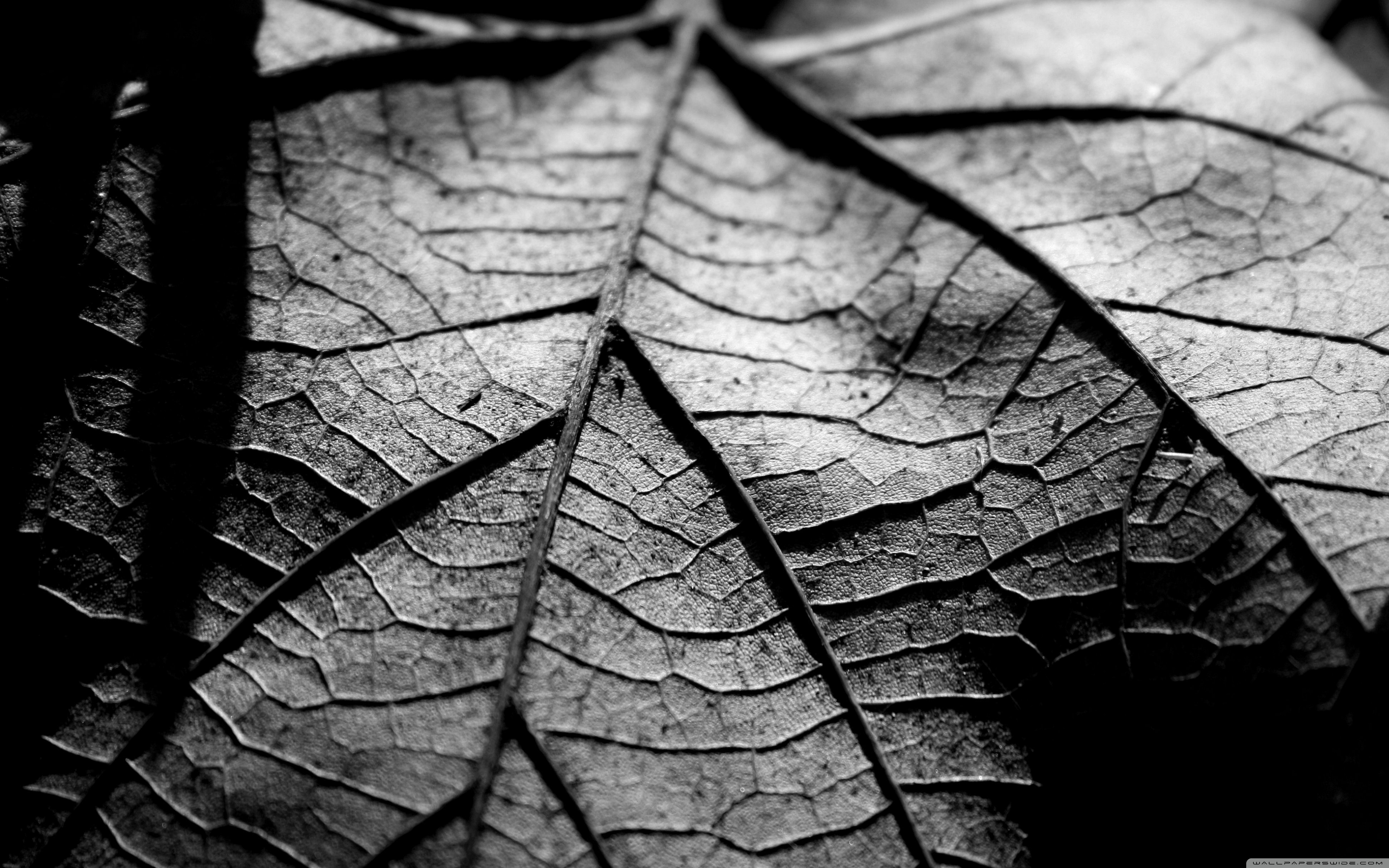 Black And White Leaf Wallpaper