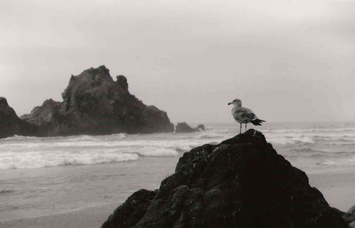 Download Black And White Ocean Wallpaper Gallery
