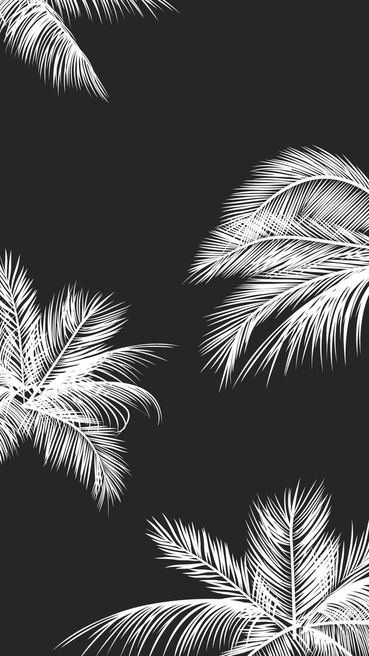 Black And White Wallpaper Pinterest