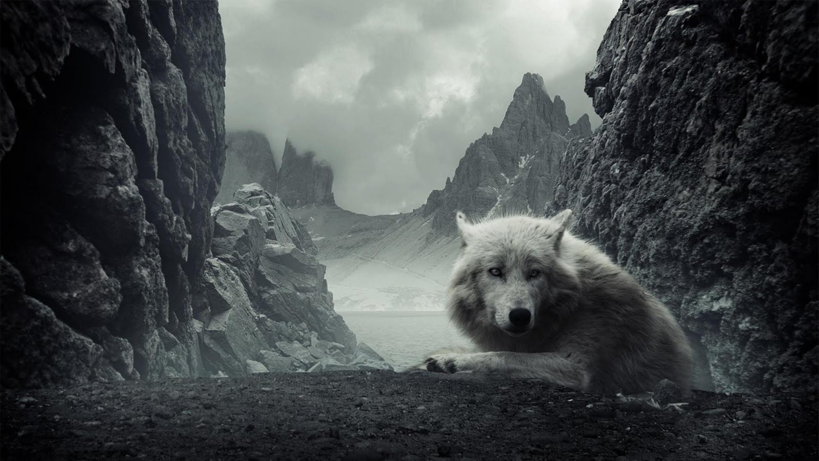 Black And White Wolf Wallpaper