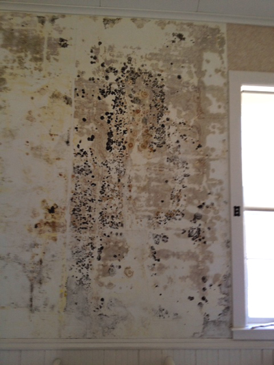 Black Mold Under Wallpaper