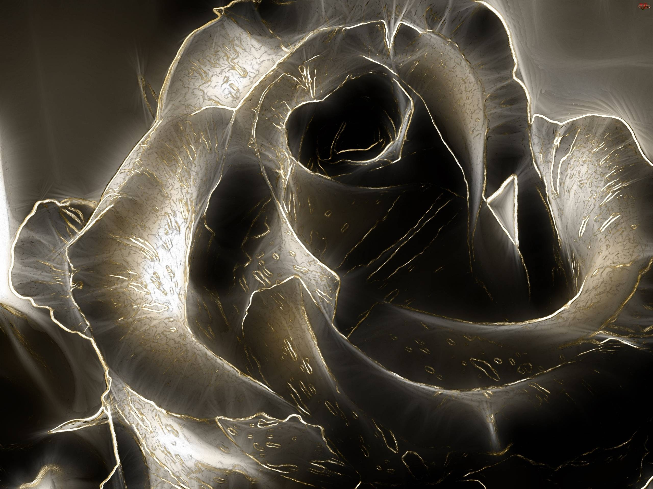Black Rose 3D Wallpaper