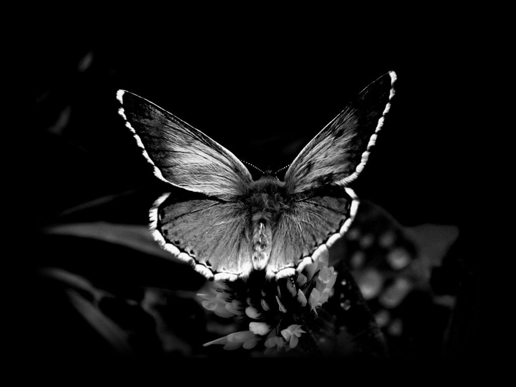 Black Wallpaper With Butterflies