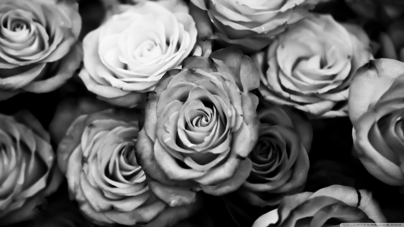 Black White Rose Wallpaper