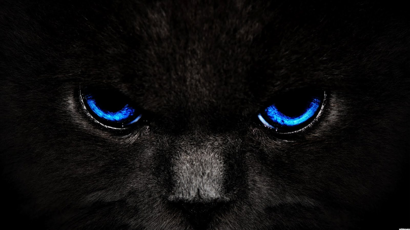 Blue Pc Wallpaper