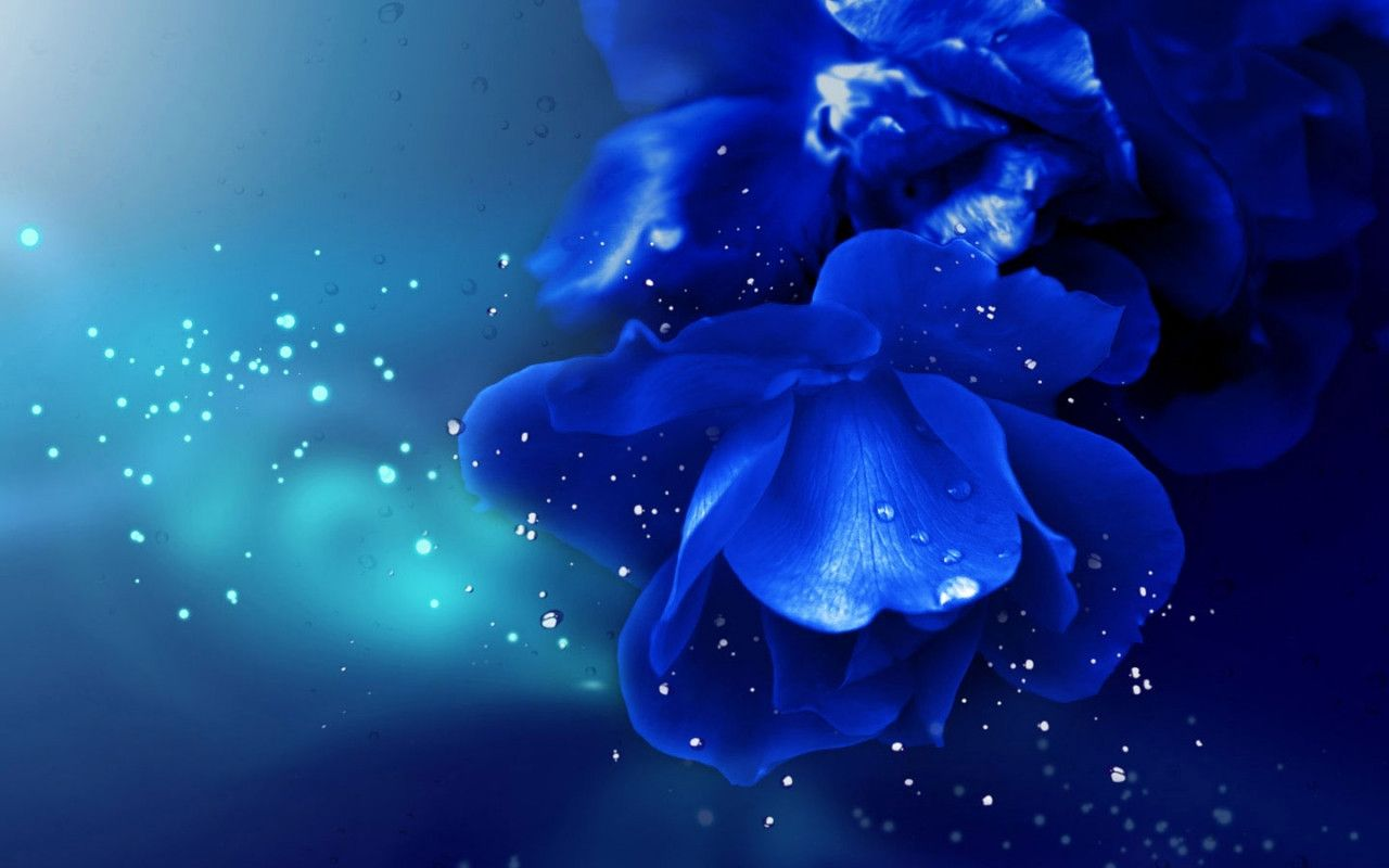 Blue Rose Background Wallpapers