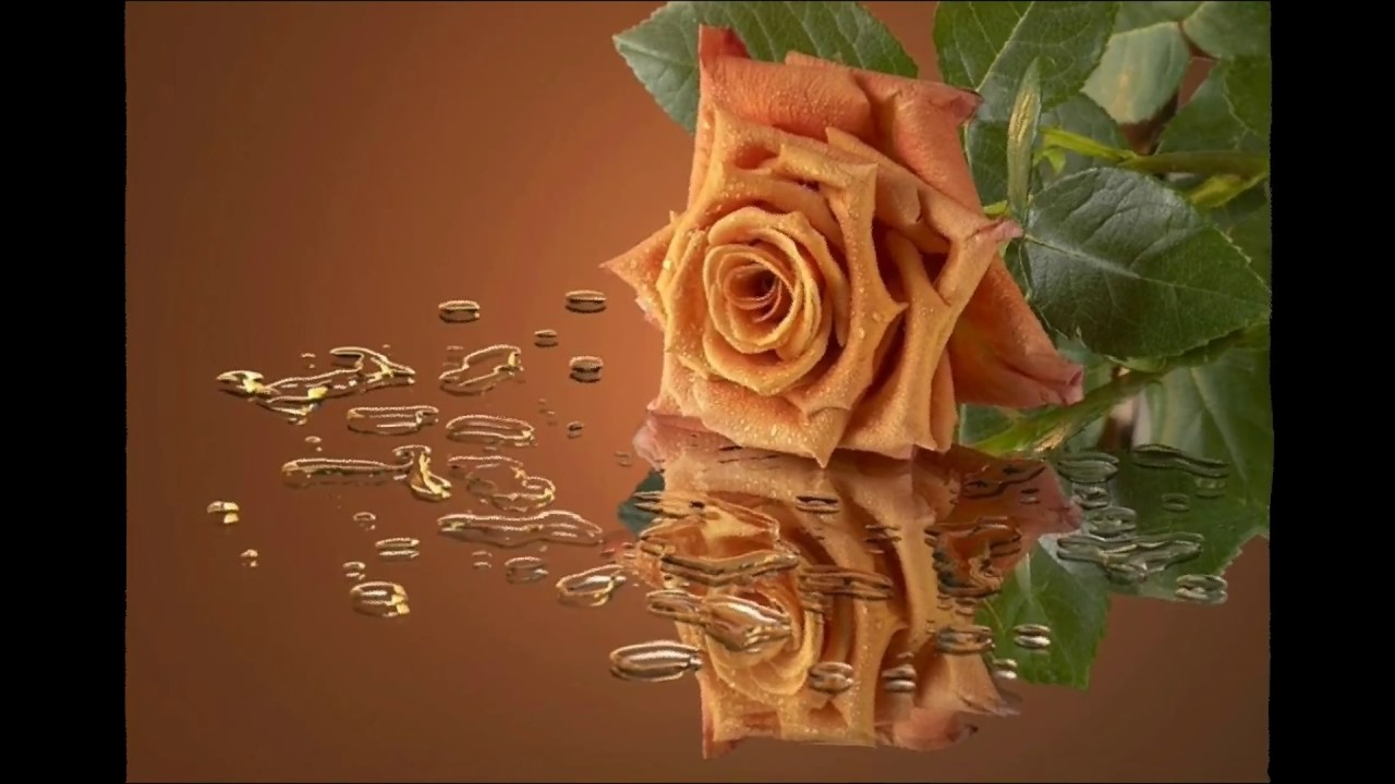 Download Brown Rose Wallpaper Gallery