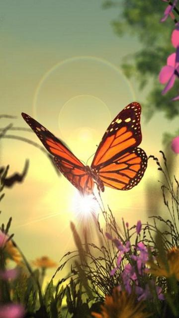 Butterfly Wallpaper For Phone