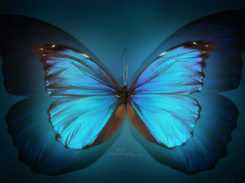 Butterfly Wallpaper Free Download Mobile