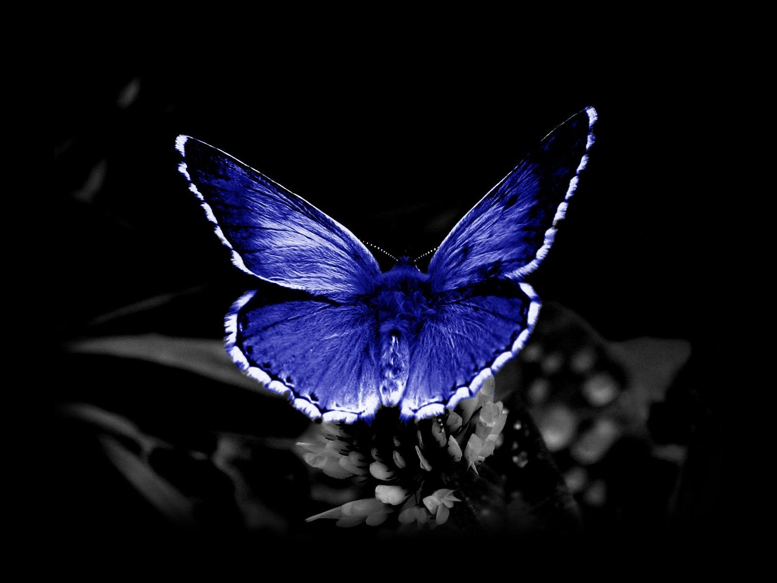 Download Butterfly Wallpaper Free Download Mobile Gallery