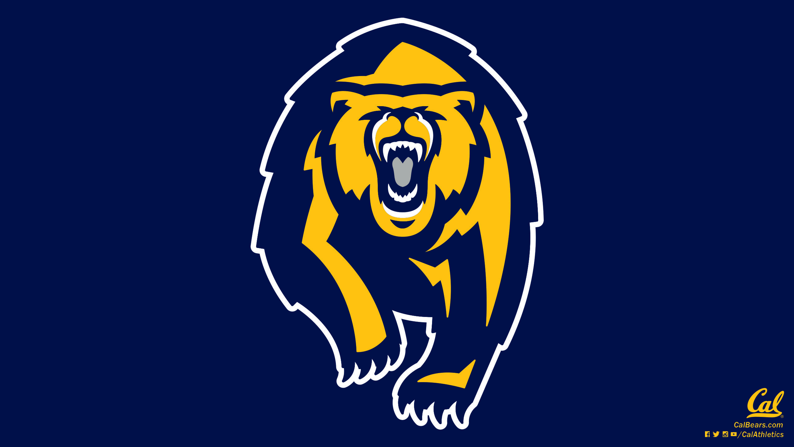 California Golden Bears Wallpaper