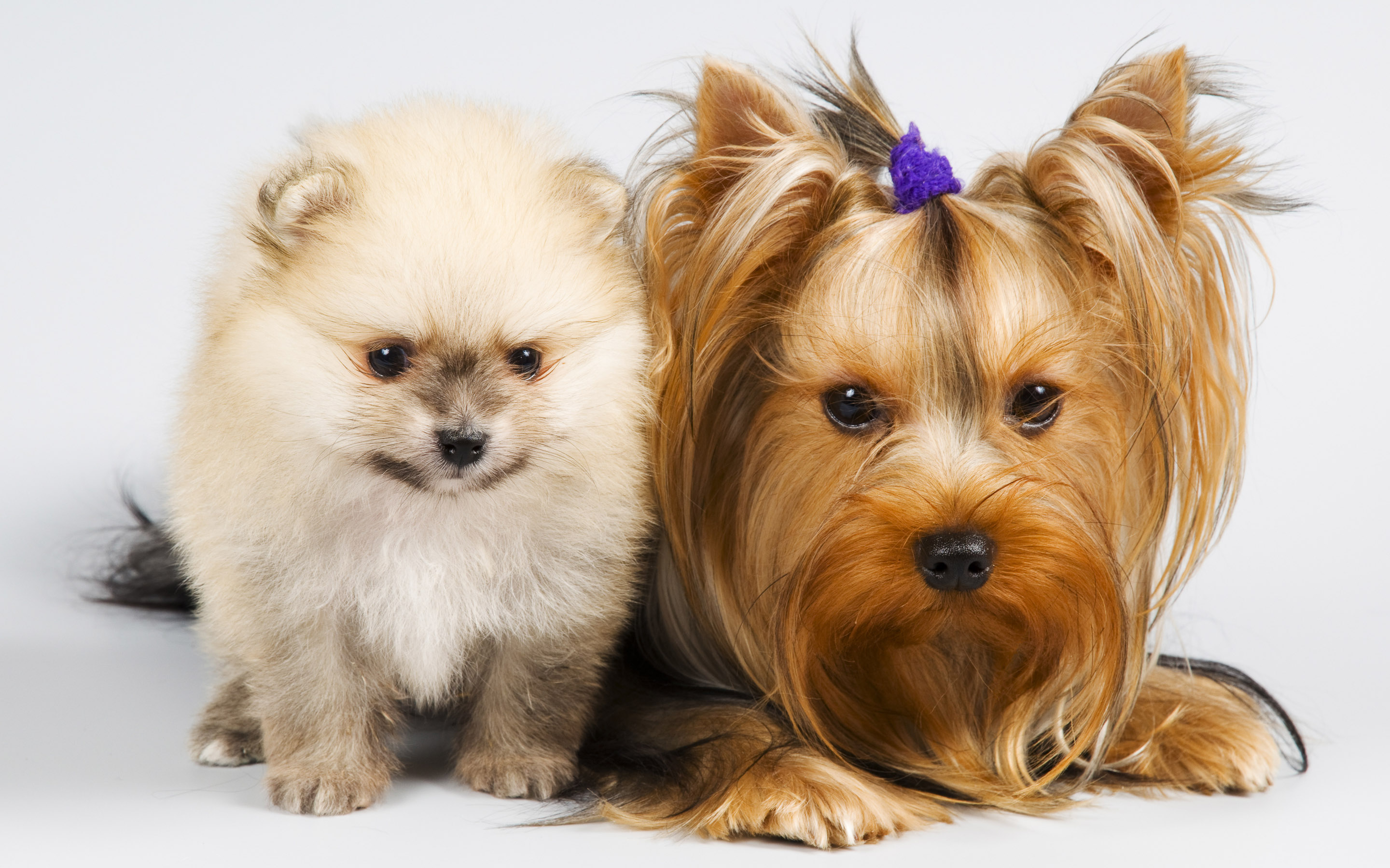 Download Cat And Dog Wallpapers Download Free Gallery