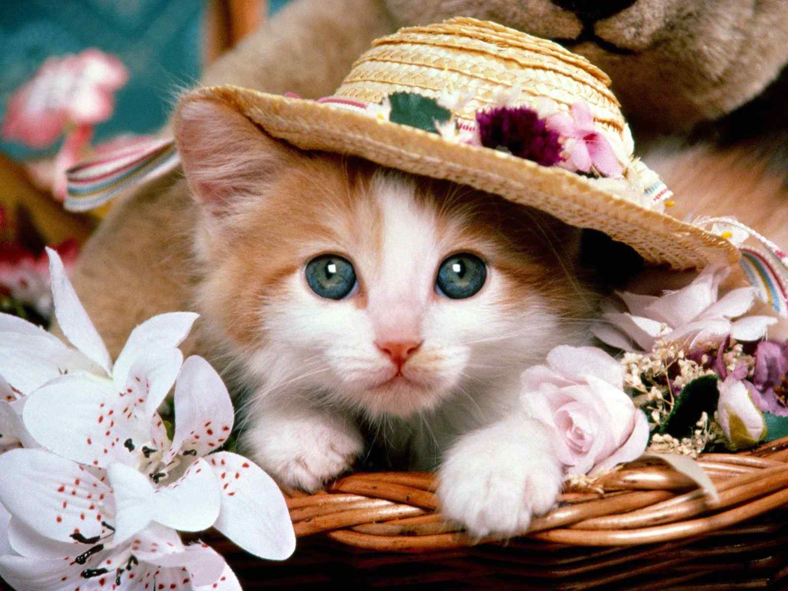 Cat Beautiful Wallpapers