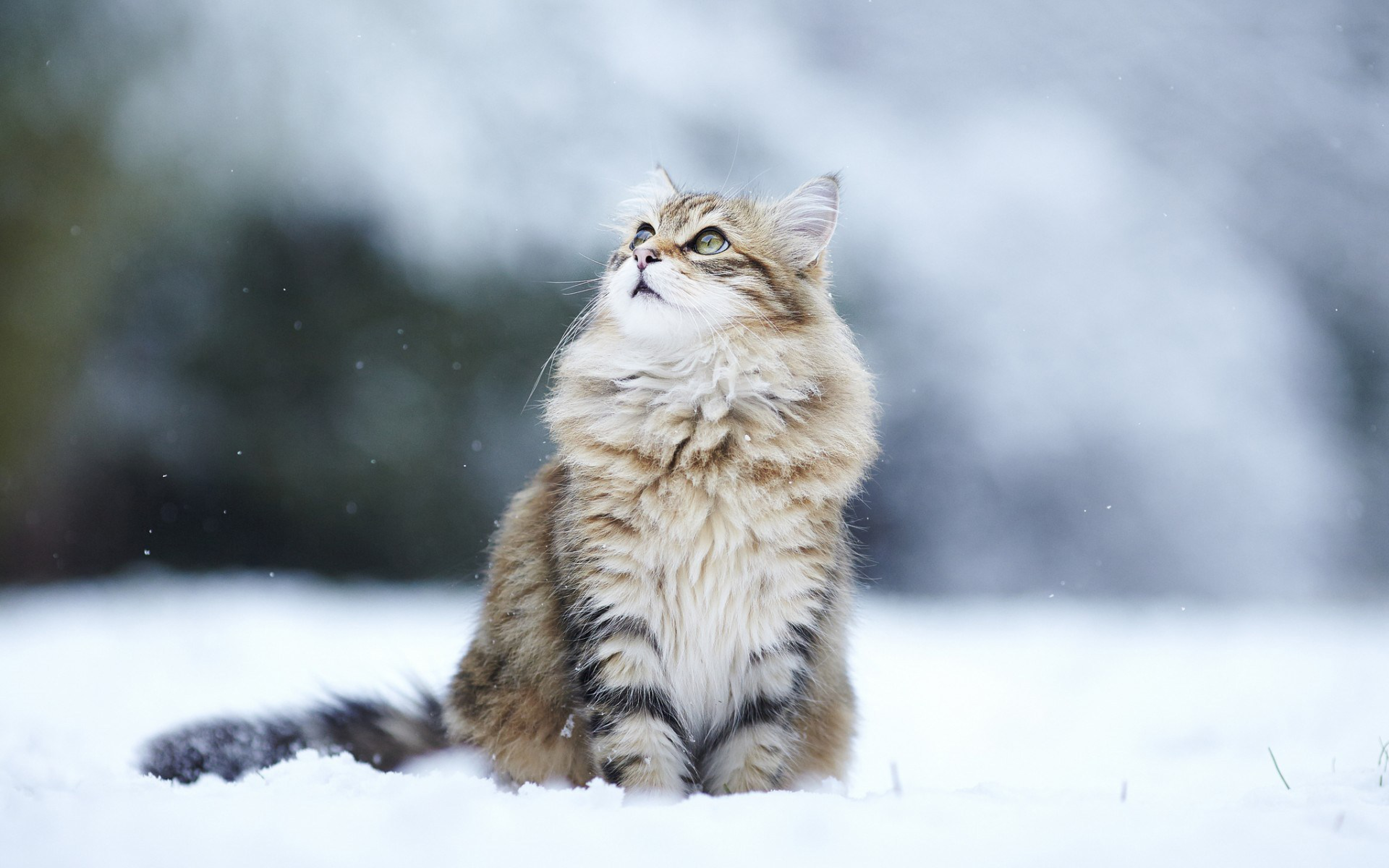 Cat Snow Wallpaper