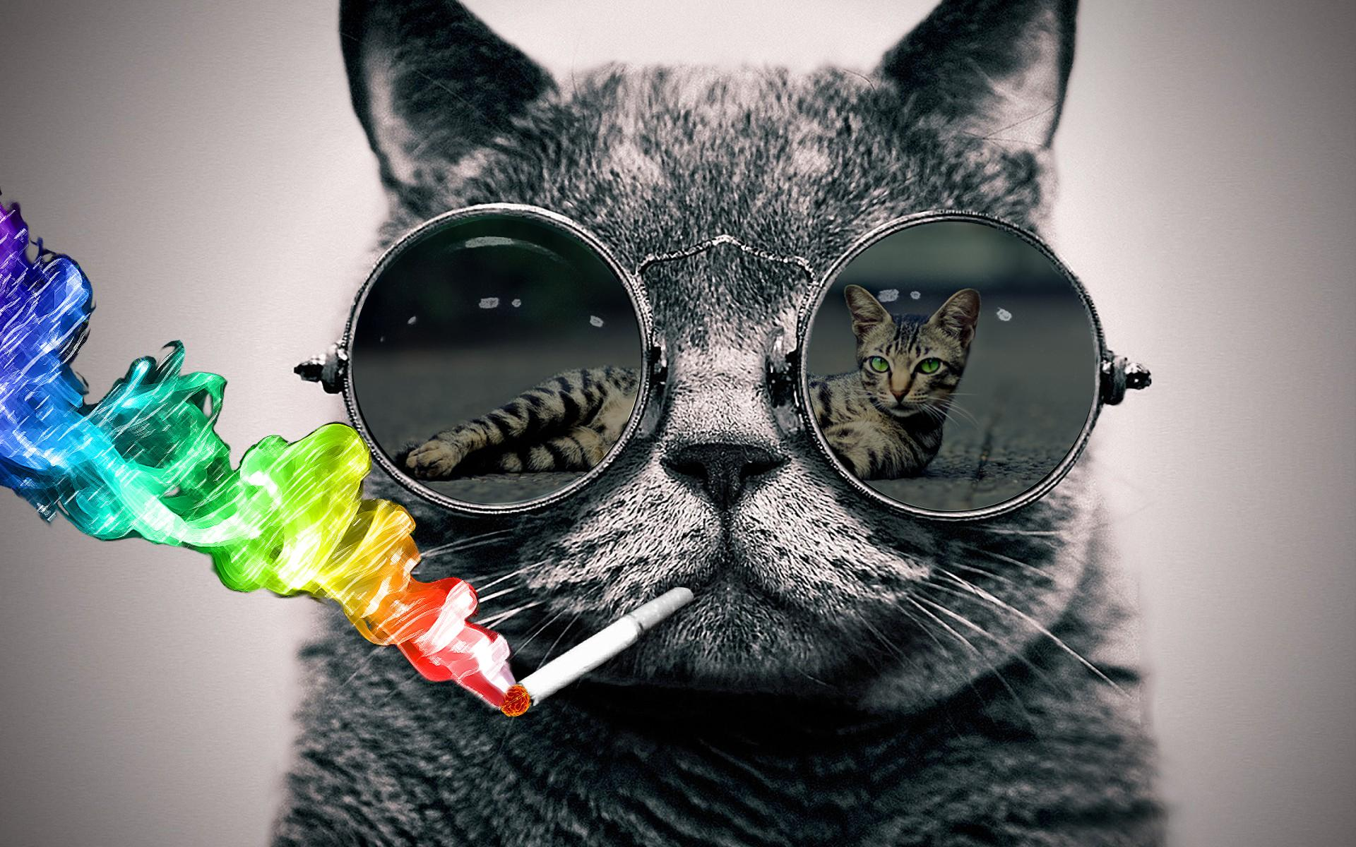Cat With Sunglasses Wallpaper