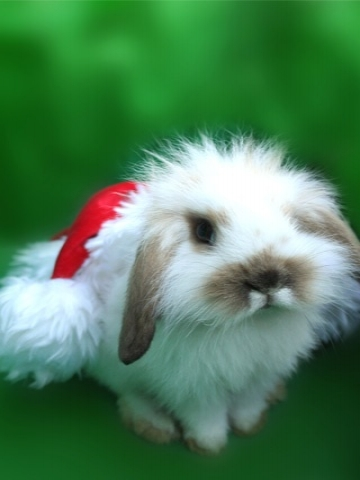 Christmas Bunny Wallpaper