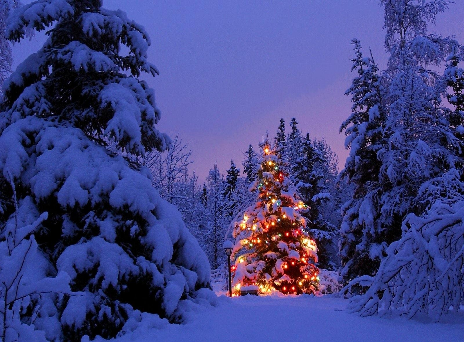 Christmas Tree In Snow Wallpaper