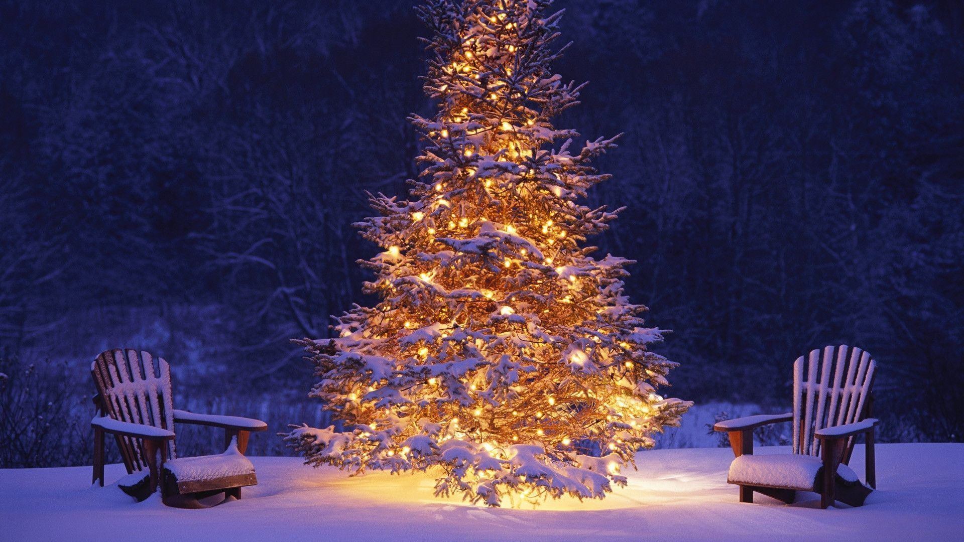 Christmas Tree Wallpaper Backgrounds