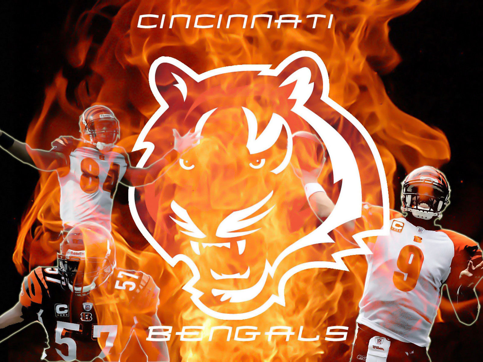 Cincinnati Bengals Live Wallpaper