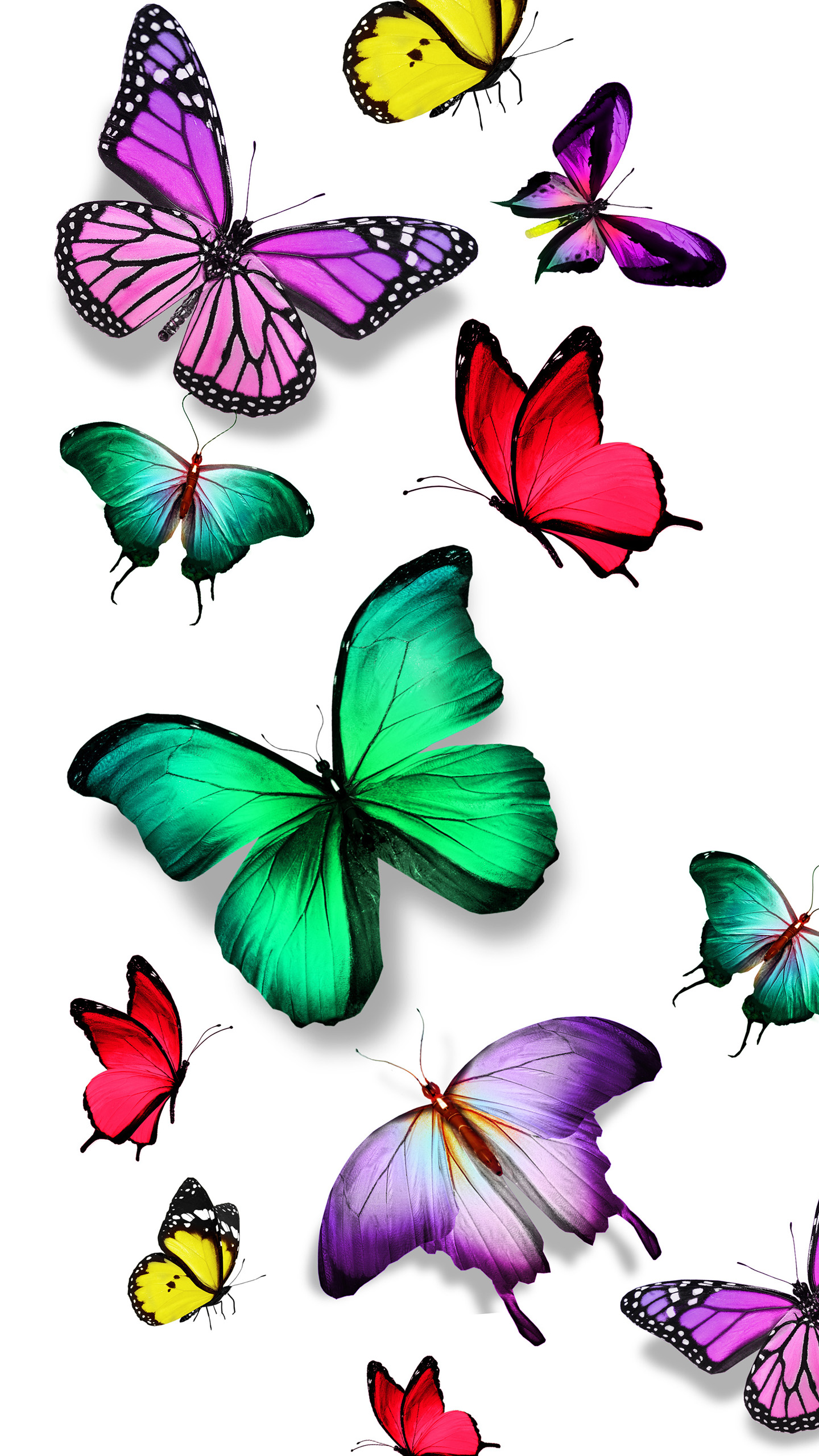 Download Colorful Butterfly Wallpaper Gallery