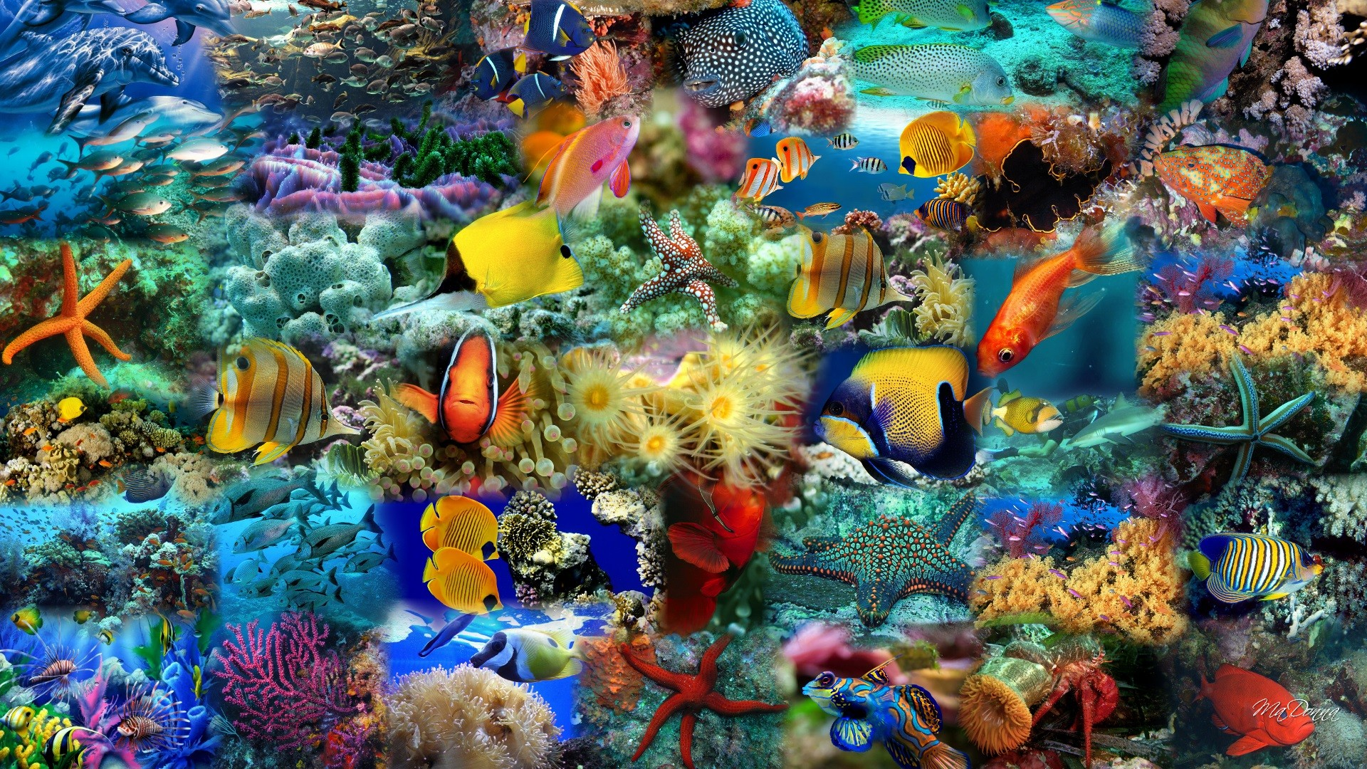 Colorful Food Wallpaper Free Download: Download Colorful Fish Wallpaper Gallery