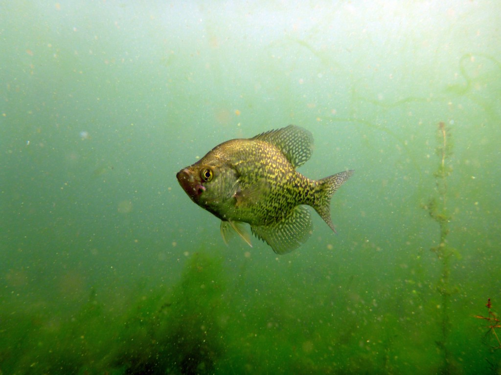 Crappie Fishing Wallpaper