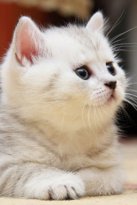 Cute Animals Wallpapers For Mobile
