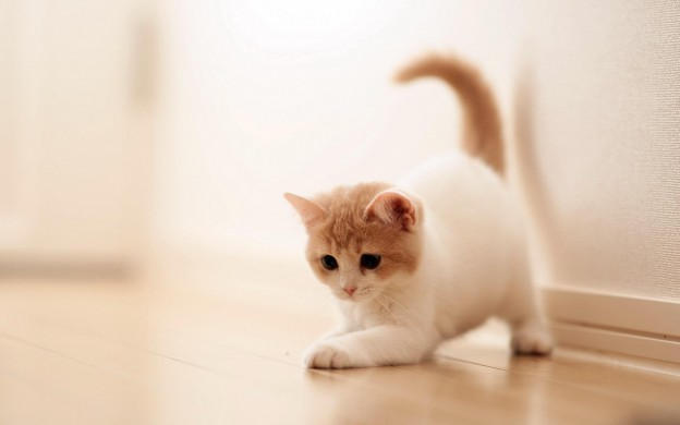Cute Baby Cat HD Wallpaper