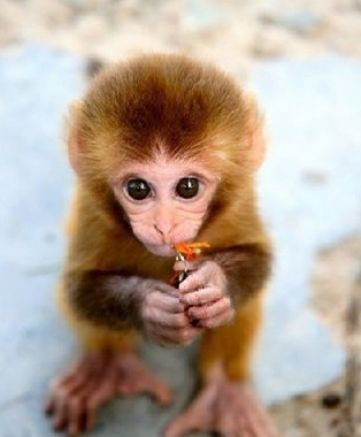 Cute Baby Monkey Wallpapers