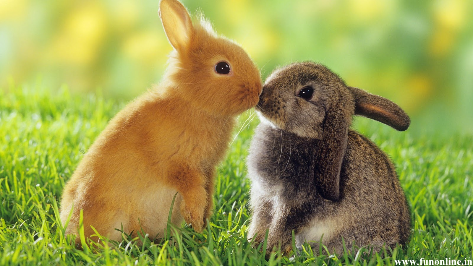 Cute baby rabbit pictures