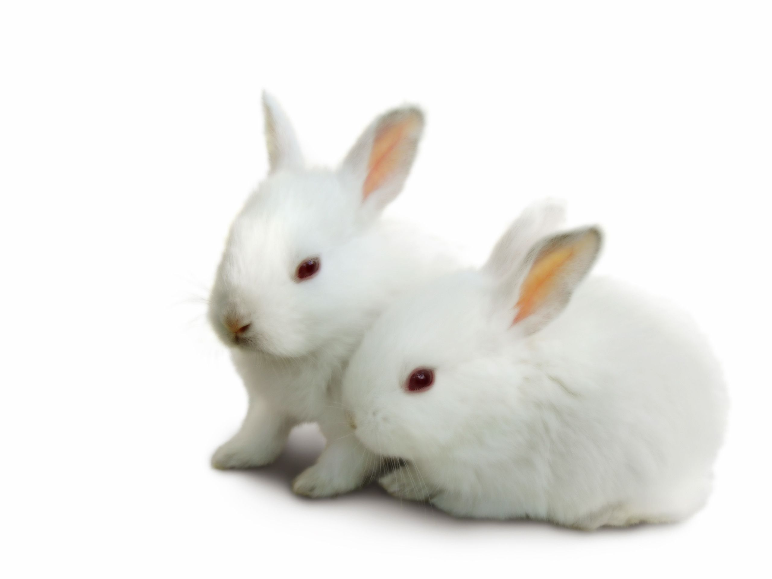 Best Food For Rabbits For Winter